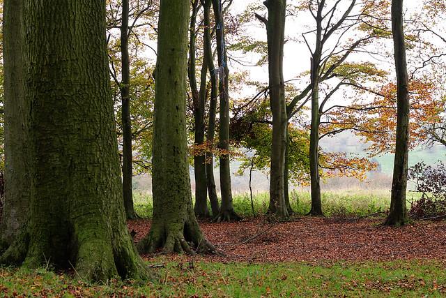 trees1.1