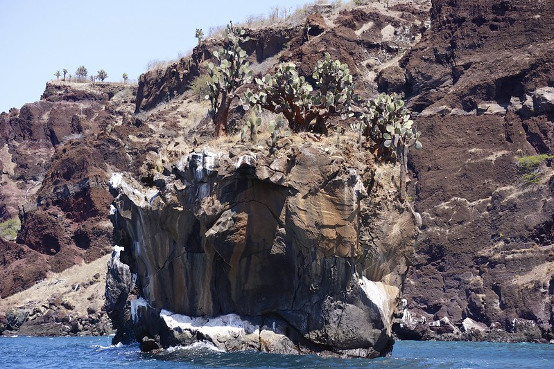 galapagos san salvadore 143