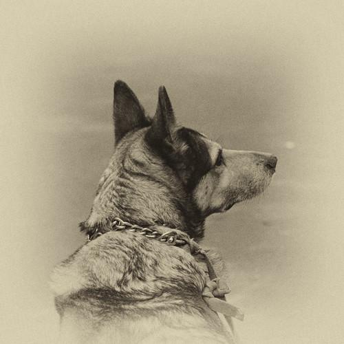 IMG_3933 dog bw