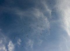 72 stork flyby
