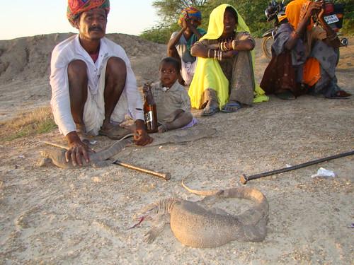 लापोड़िया में शिकार करने पर दंड