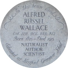Photo of Alfred Russel Wallace stone plaque