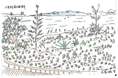 慈湖海岸景色-五月的潮詩,孫麗婷繪。