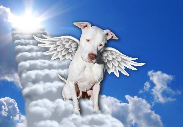 Breed Specific Legislation Bsl Kills Innocent Bully