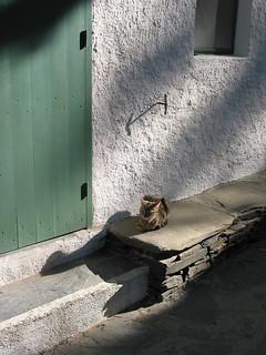Feral Cat at Casa Dali, Port Lligat