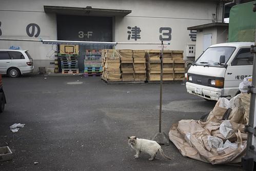 JS C2 11 024 福岡市中央区 α7II×SoFE35 2.8ZA#