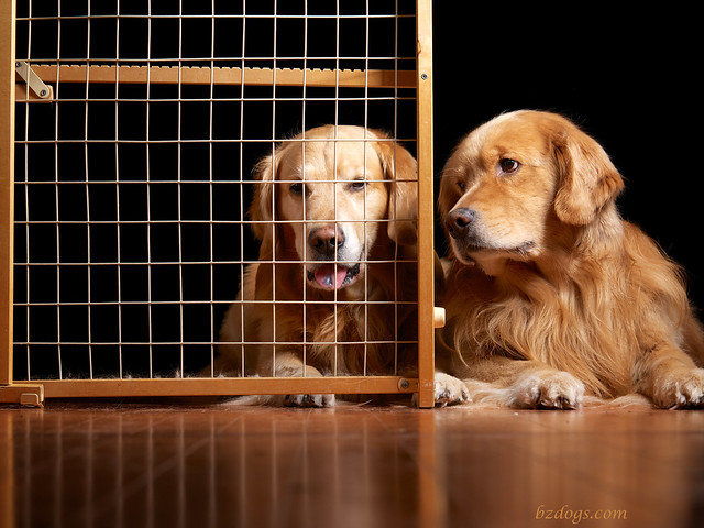 Jail Bird Dogs