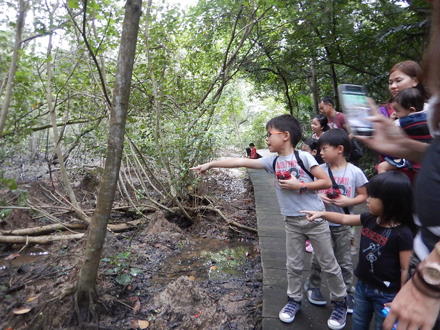 Kids exploring mangroves with the Naked Hermit Crabs