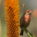 Finch in Field of Aloe by Patricia Ware