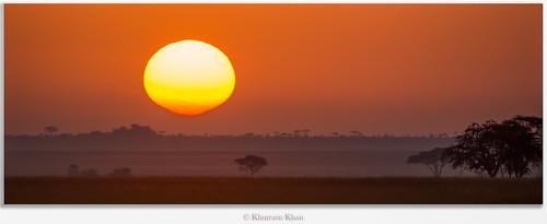 africa nature sunrise ilovenature tanzania nikon flickr ngc conservation lions nikkor plains serengeti goodmorning masai ilovewildlife khurramk khurramkhan
