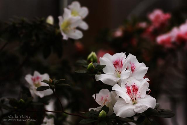 botanical garden_36