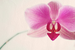 Orchid_0580
