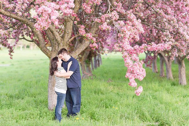 Can you believe this was one of their first shots?! Alanna + Brad's pink blossom engagement is on the blog!! http://www.nicoleamanda.ca/blog/pink-blossom-engagement