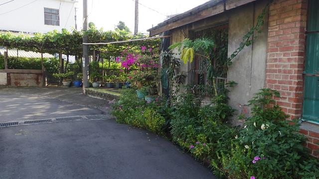 57-7-植物
