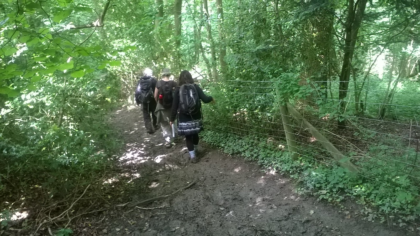 Cautious descent Near Hurst Wood, Kent