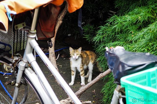 Today's Cat@2016-06-12