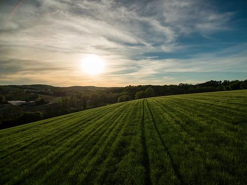 Fieldscape