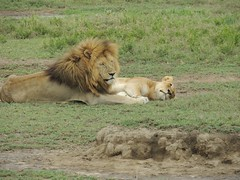 8720710311 cb6e421bbb m The best vacation and best experience. Thomson Safaris Review: Ed & Karen B.