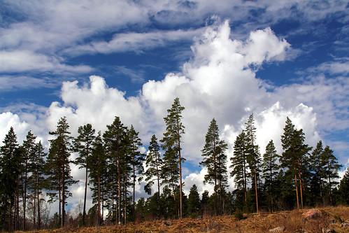 sky cloud nature clouds sweden