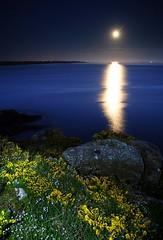 Lever de la Lune - Port-Manec'h