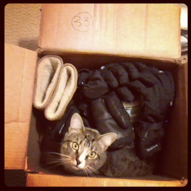 Box #33: boots, gloves and one cat
