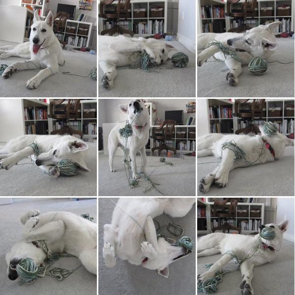 when puppy meets craft supplies...