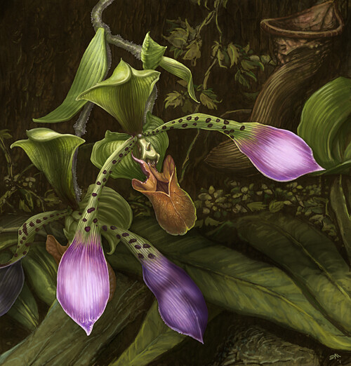 Orchids Final