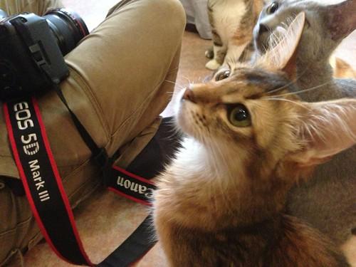 猫カフェ てまりのおうち