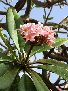 Flowers in Barbados