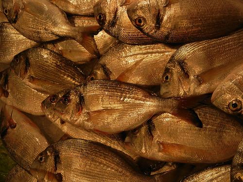 DSCN3123 _ Pescheria, Fish Market, Rialto Mercato, Venezia