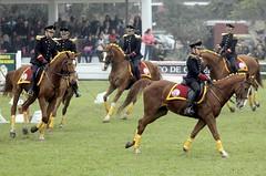 stick and ball games(0.0), animal sports(0.0), western riding(0.0), racing(0.0), eventing(0.0), sports(0.0), stick and ball sports(0.0), polo(0.0), endurance riding(0.0), team sport(0.0), ball game(0.0), jockey(0.0), equestrianism(1.0), english riding(1.0), equestrian sport(1.0),