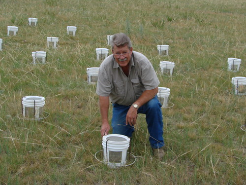 Nelson Foster inspecting cages used to test the effectiveness of different baits used to suppress grasshoppers.