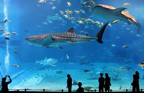 akuarium terindah