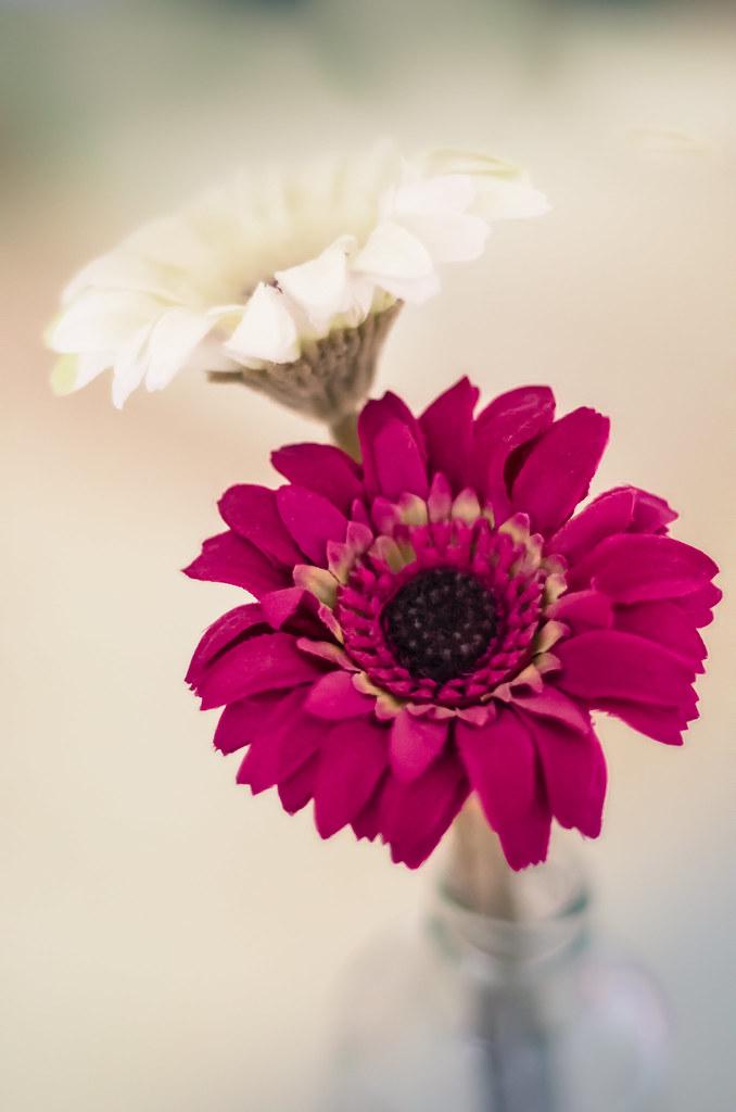Las flores de Eva