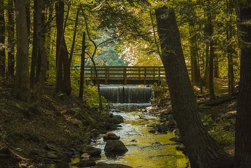 bridge trees fall water waterfall stream