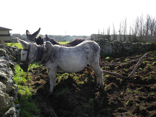Actividad agrícola