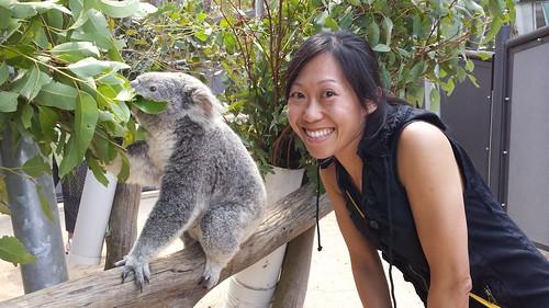 Taronga Zoo: Koala