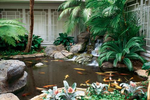koi-fish-pond-with-palm-tree