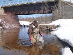 Matt Symbal electrofishing the Rock River, Alger County, Michigan