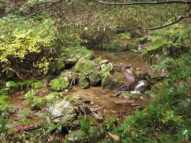 ゴギの生息環境は小さな渓流で,小さな淀みがあるところ.