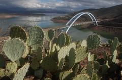 Theodore Roosevelt Bridge with cactus, Arizona