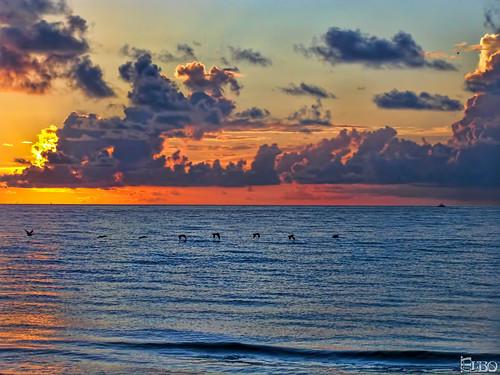 ocean beach pelicans water clouds sunrise colorful florida cloudy boyntonbeach singleexposure topazplugins