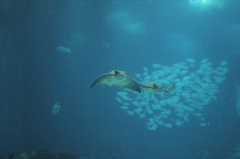 lisbon oceanarium 6