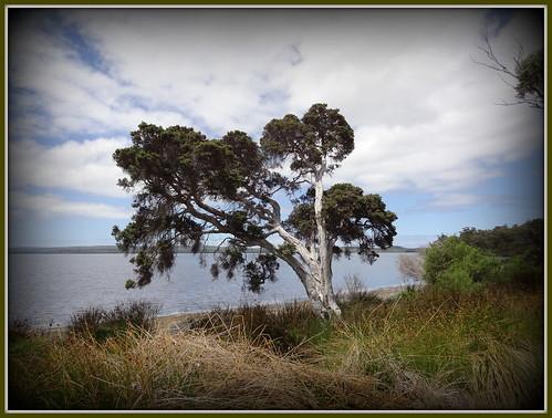 cloud tree water clouds denmark australia inlet baum tmt waustralia riverinlet barktree cloudsstormssunsetssunrises