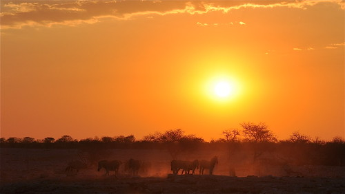 africa sunset sun sunlight nature night dusk wildlife safari dust waterhole namibia etosha zebras southernafrica wildlifereserve wildlifeportrait