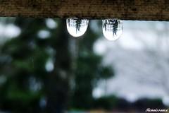 Raindrops and Umbrella