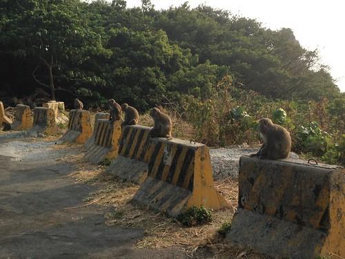 人猴互動對獼猴也是壓力源。