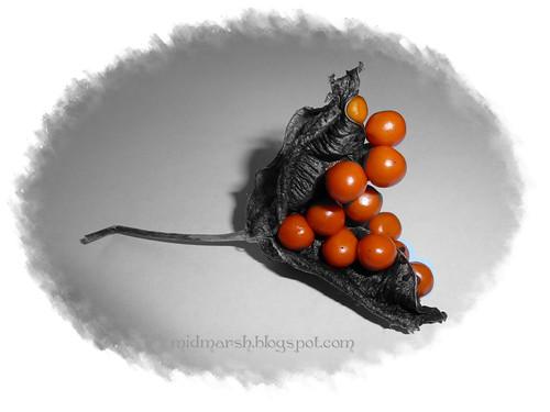 Seeds01
