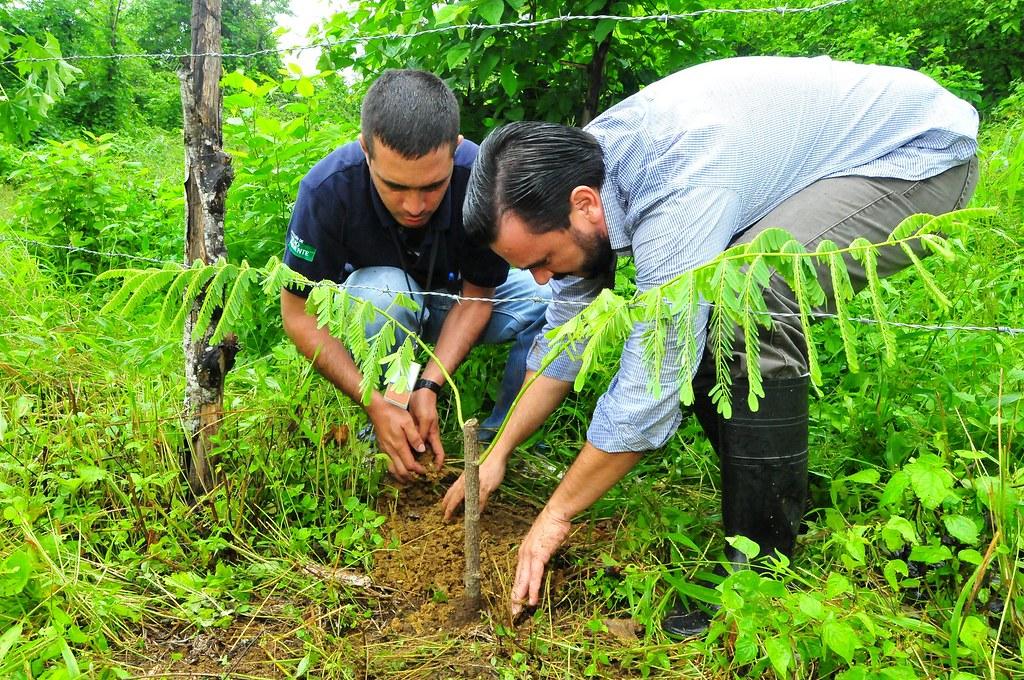 Vivero forestal provincial don 363 rboles a rea de for Importancia economica ecologica y ambiental de los viveros forestales
