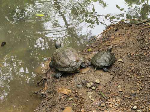 Panama City: les tortues du Parque Natural Metropolitano